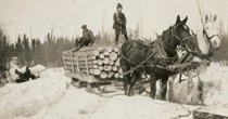 Logging in the 1900's. Horse and logs on sled.